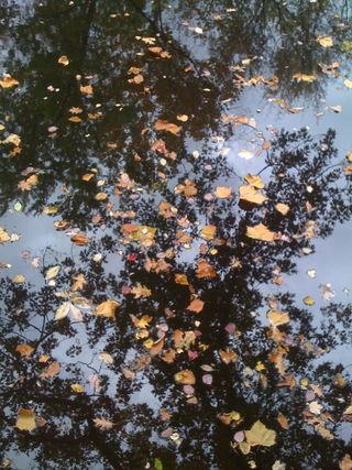 Leaves on charles