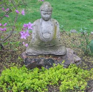 Buddha_thyme