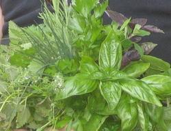 Bouquet_of_herbs